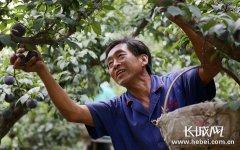 河北:特色产业助推农业高质量发展