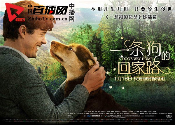 《一条狗的回家路》终极预告抢先治愈