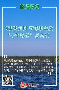 """【实景图解】带你看雄安""""千年秀林"""""""