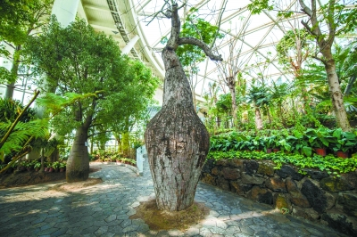 弥勒树、菩提树…北京世园会植物馆来