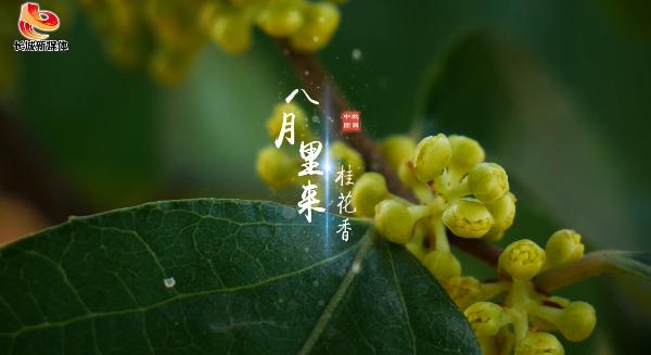 【微视频】中秋月圆人团圆